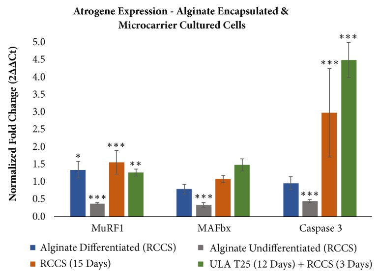 Muscle Atrophy Marker Expression Differs between Rotary Cell Culture System and Animal Studies.